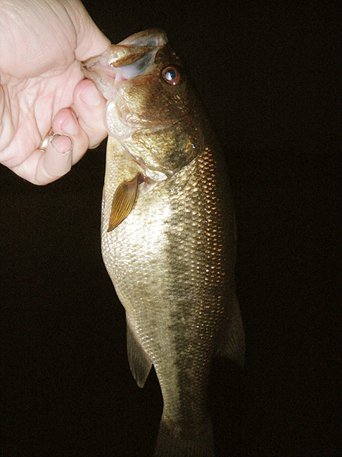 042010largemouth.jpg
