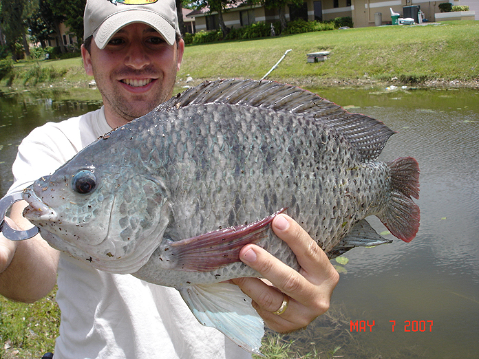 Exotic fish of florida for Florida freshwater fish species